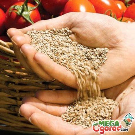 Особенности и преимущества размножения семенами