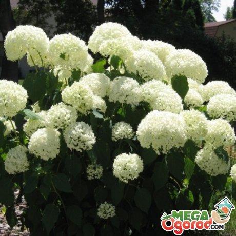 Как сажать растение?