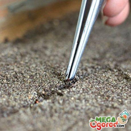 Как правильно высаживать семена