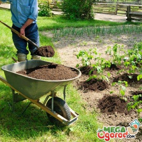 Куриный помет - лучшее удобрение для повышения урожайности