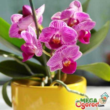 Когда и как нужно удобрять цветы?