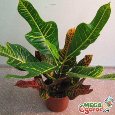 Освещение, влажность и температура для растения
