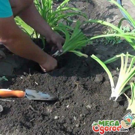 Советы по выращиванию