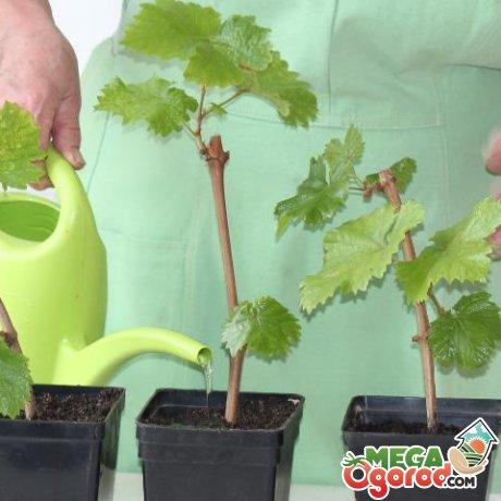 Способы выращивания