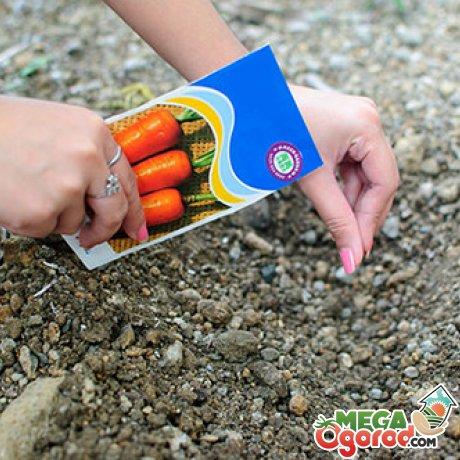 Способы и советы по посадке семян моркови