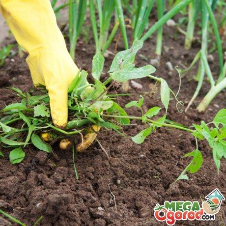 Агротехнические меры в борьбе с сорняками