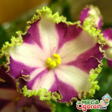 Основные советы по уходу за уникальным цветком
