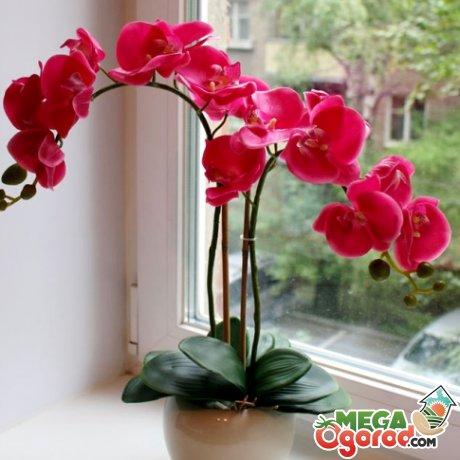 Особенности освещения орхидеи