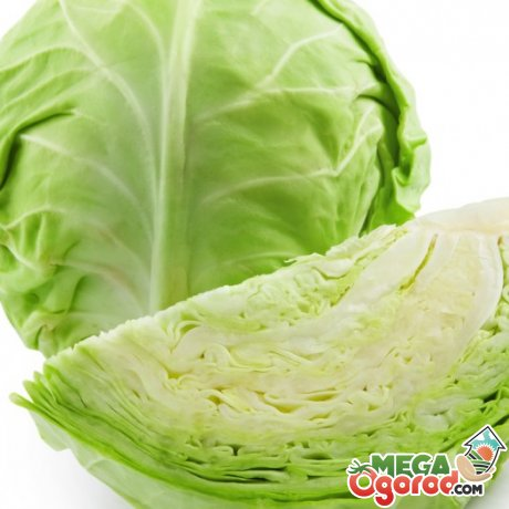 Полезные вещества в составе овоща
