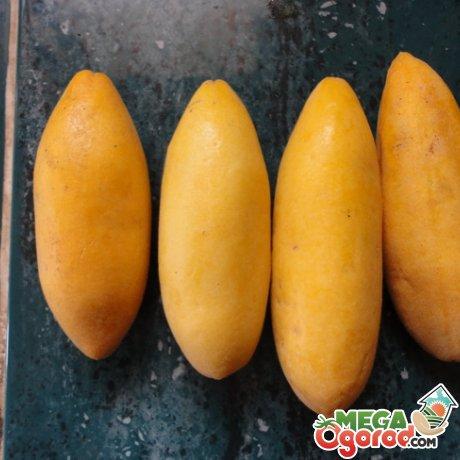 пассифлора банановая