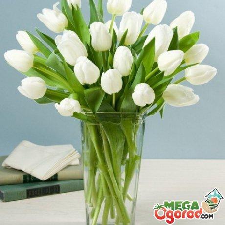как хранить срезанные тюльпаны