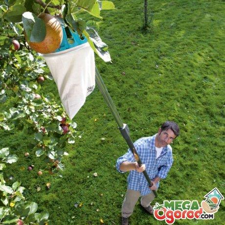 Мужчина собирает яблоки плодосъемником