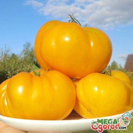 Спелые желтые помидоры