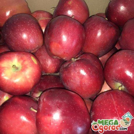 Урожай яблок Делишес