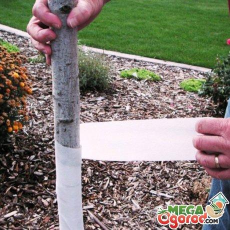 Обмотка ствола дерева бинтом