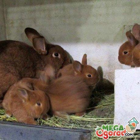 Крольчиха с дитенышами