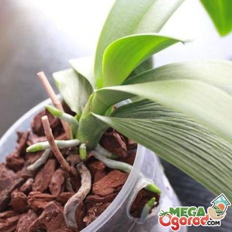 Вянут листья орхидеи