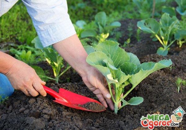 Короб-парник для выращивания капусты своими руками Своими руками - Как