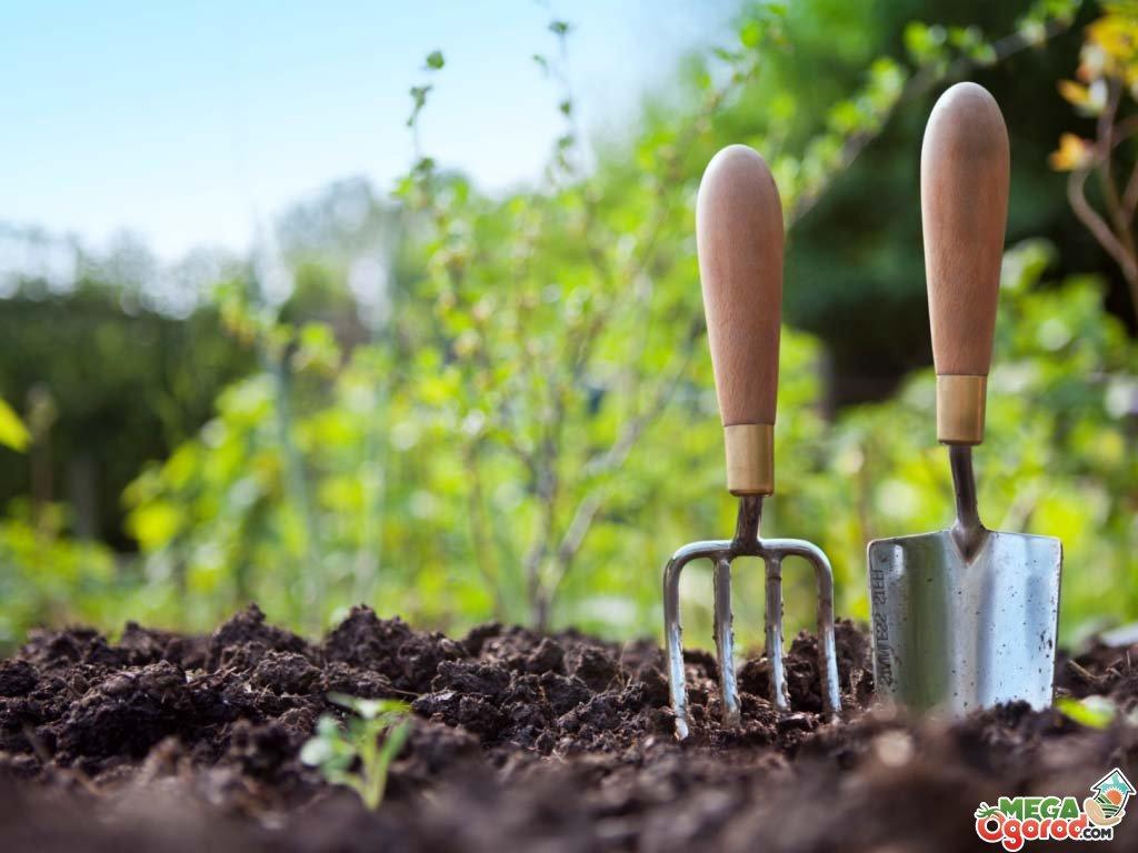 Работающий способ, как избавиться от сорняков и травы навсегда. Легко и надолго картинки