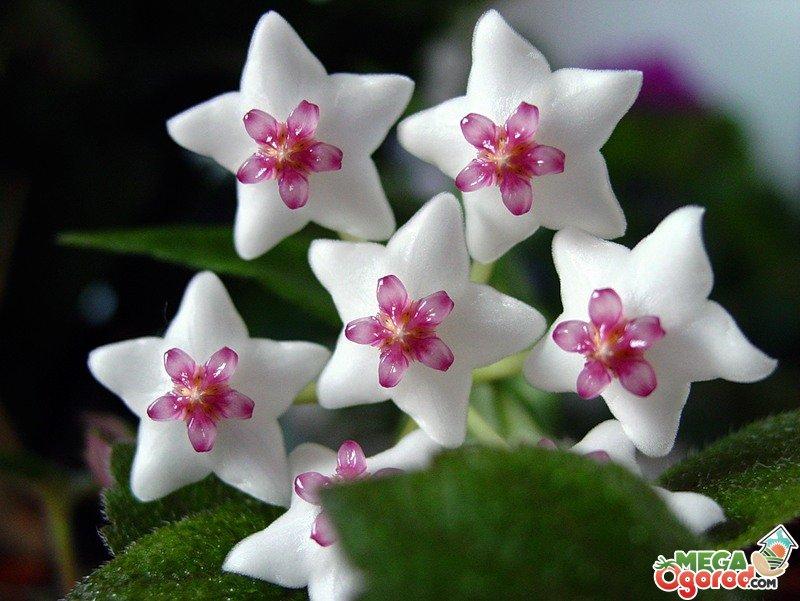 Всё о комнатных растениях и цветах