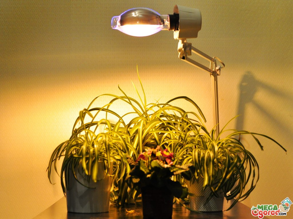 фитолампы для подсветки растений в домашних условиях