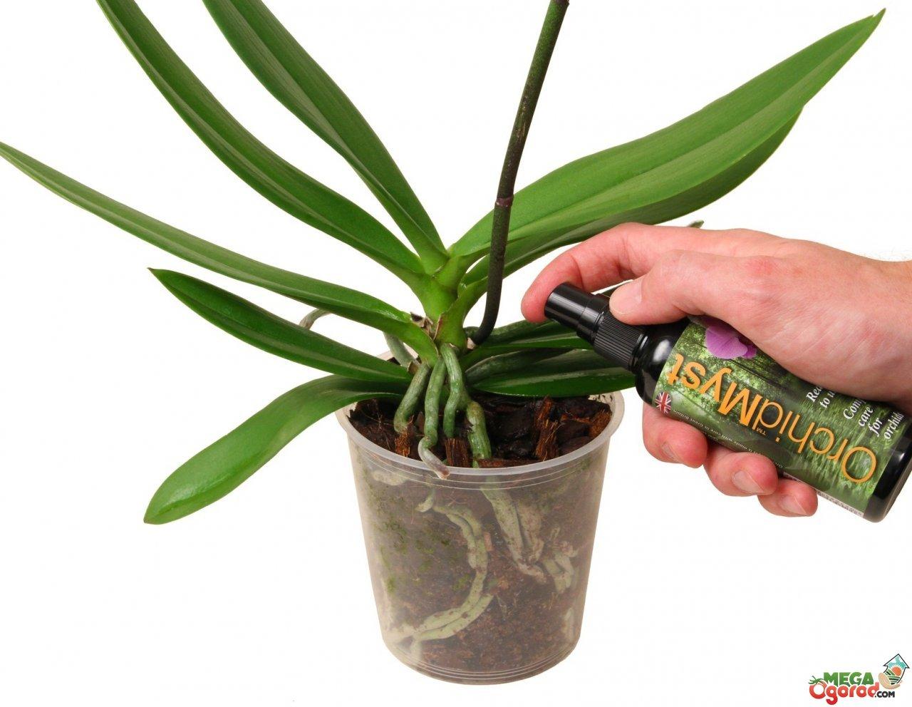 В какой горшок и как пересадить орхидею в домашних условиях