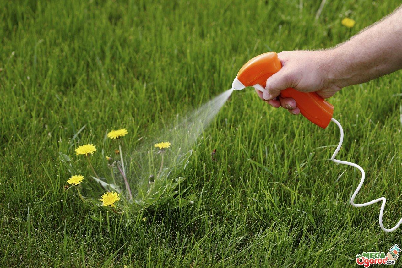 Польза и вред сорняков: уничтожать или использовать