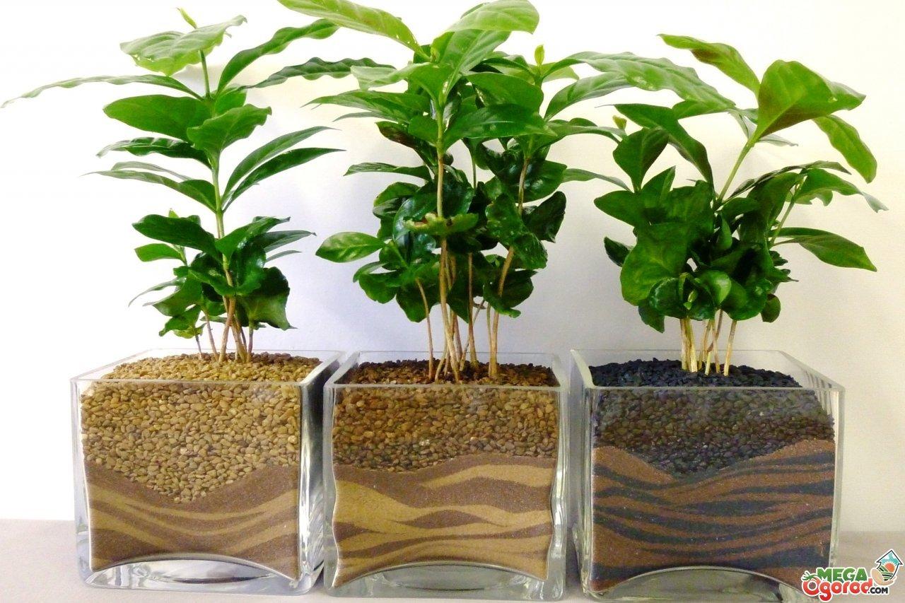 Уход в домашних условиях за растениями 322