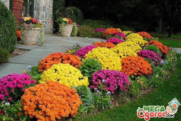 Самые красивые клумбы цветов