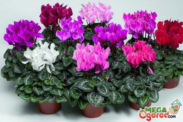 семена лекарственных растений семена комнатных растений