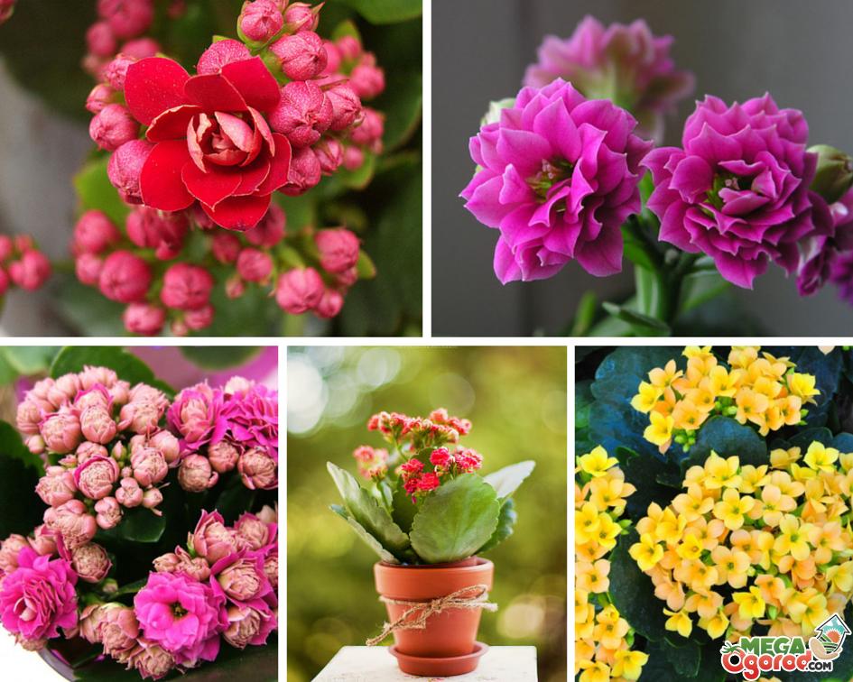 Красивое фото цветов домашних