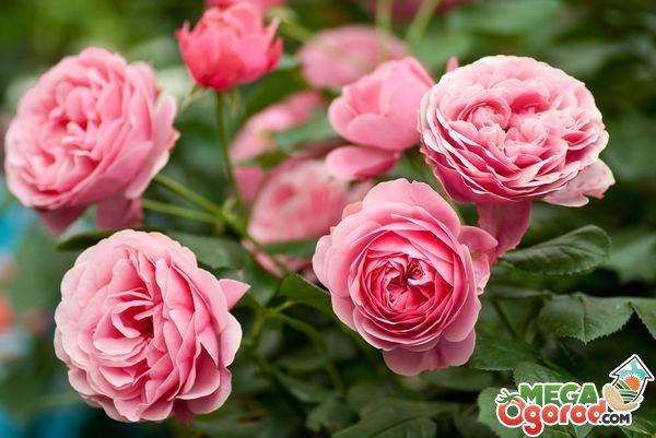 Все растения живые организмы все цветы растения роза-цветок купить цветы авиамоторная