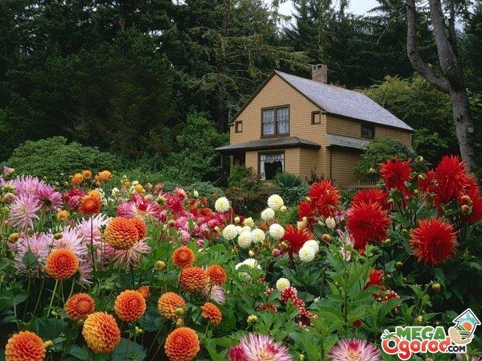 Лучшие фото цветов многолетников