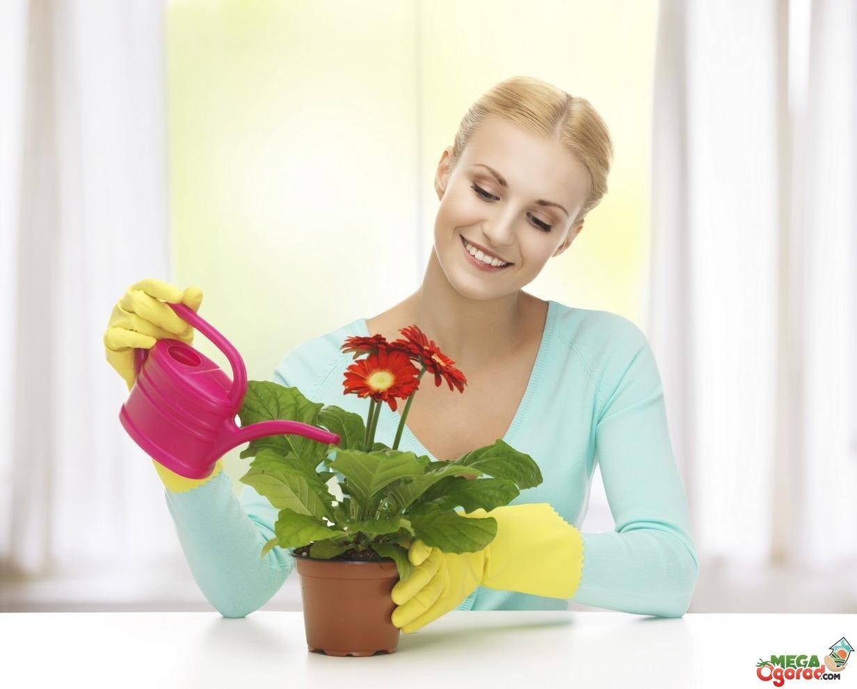 минеральные удобрения и подкормки для комнатных растений