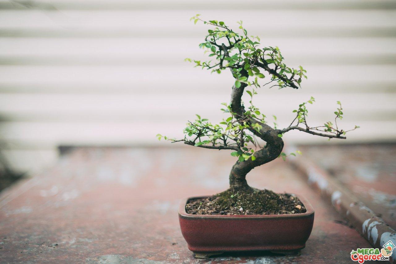 Японское дерево своими руками фото 84