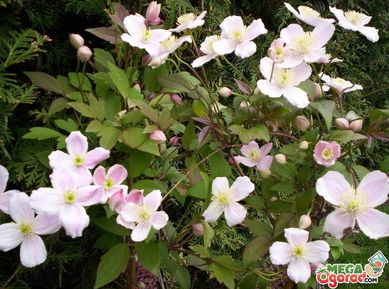 Садовый участок цветник