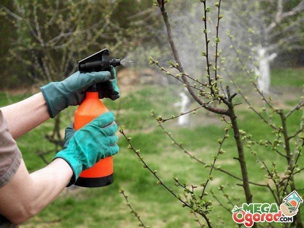 обработки деревьев весной.
