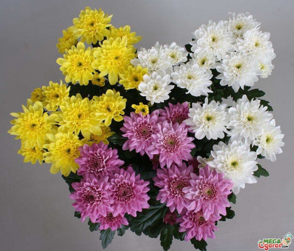 Посадка и выращивание цветов 15