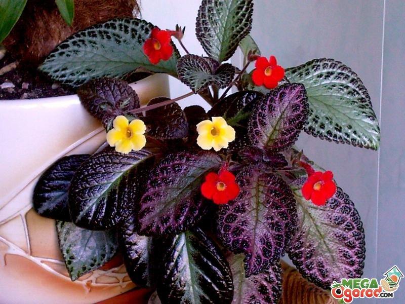 Корзинка для цветов из мастики