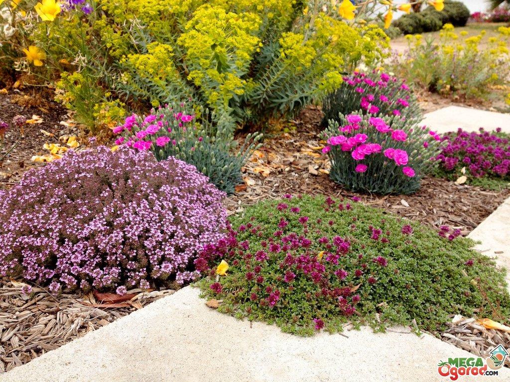 Засухоустойчивые цветы и травы для участка: обзор лучших растений