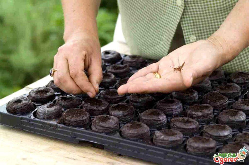Как вырастить клубнику из семян в домашних условиях 98