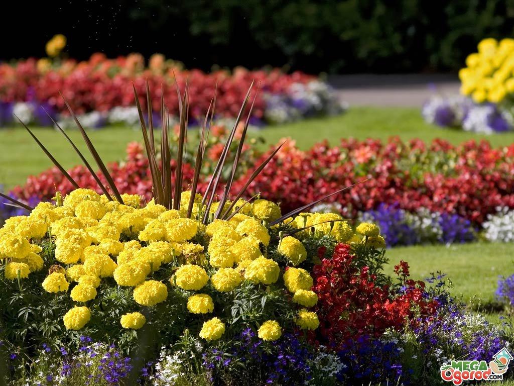 Сочетание цветов на клумбе на даче: схема с фото и рекомендации ...
