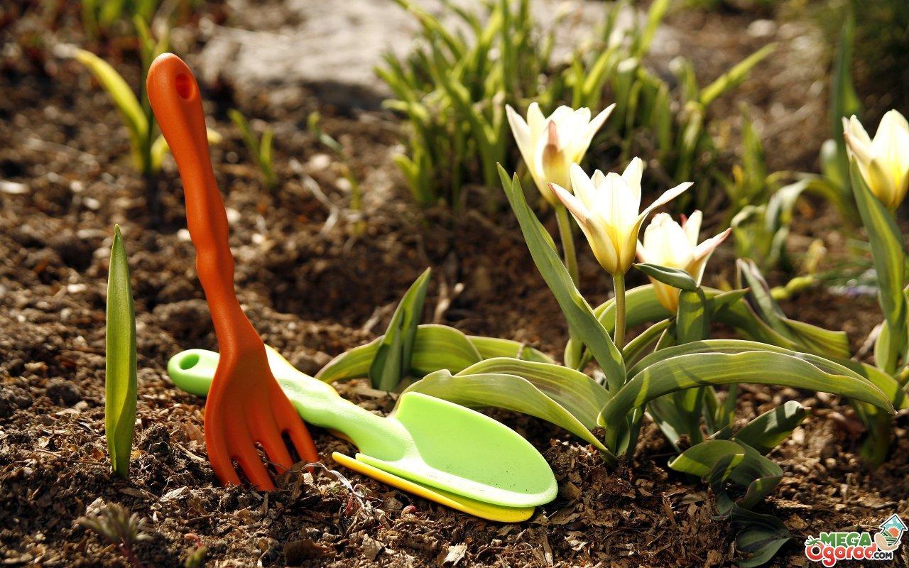 Работы осенью в саду: все, о чем надо знать садоводу
