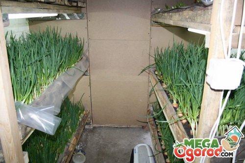 Как в домашних условиях в квартире выращивать грибы