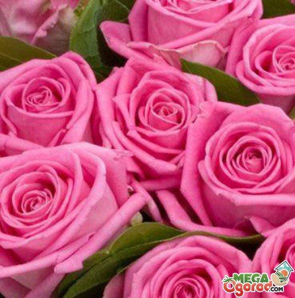 В какую воду ставить розы чтобы дольше стояли
